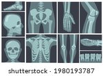 x ray shots of human body.... | Shutterstock .eps vector #1980193787