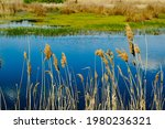 spring swamp with reeds. nature ...   Shutterstock . vector #1980236321