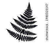 beautiful fern leaf. botanical... | Shutterstock .eps vector #1980323147