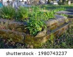 Old Abandoned Graves Overgrown...