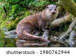 Portrait of an otter  uk