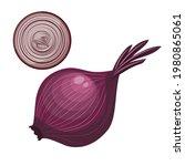 red onion. vector illustration...