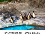Cute Humboldt Penguins ...