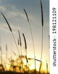 long grass at sunrise | Shutterstock . vector #198121109