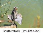 Great Gray Heron  Ardea Cinerea ...