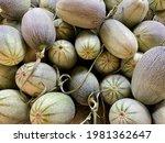A Lot Of Fresh Cantaloupe ...