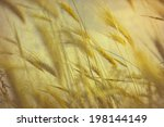 grass in wind vintage  style  | Shutterstock . vector #198144149