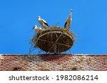 Storks On Nest Against Blue Sky ...