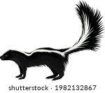 vector north american striped... | Shutterstock .eps vector #1982132867