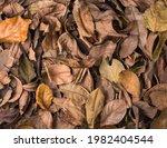 Dried Tree Leaves  Dead  Fallen ...