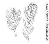 protea vector sketch of flowers ... | Shutterstock .eps vector #1982734991