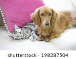 Stock photo an image of dog and cat 198287504