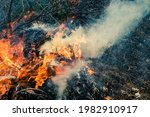 Forest Fire In The Open Air ...