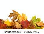 Autumn maple leaf background...
