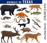 Vector Set   Animals Of Texas ...
