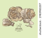 background with maitake  piece...   Shutterstock .eps vector #1983983207