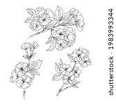 sakura  cherry blossoms.vector... | Shutterstock .eps vector #1983993344