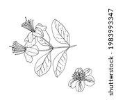 feijoa flowers. vector sketch... | Shutterstock .eps vector #1983993347