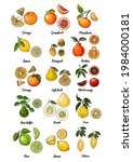 poster with citrus fruits.... | Shutterstock .eps vector #1984000181