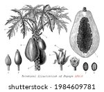botanical illustration of... | Shutterstock .eps vector #1984609781