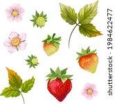 white flower. strawberries....   Shutterstock .eps vector #1984622477