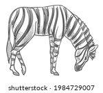 Zebra Wild Animal In Natural...