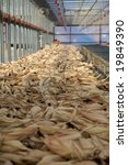 dried corn in a factory after... | Shutterstock . vector #19849390