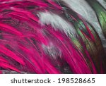 colorful feathers  chicken... | Shutterstock . vector #198528665