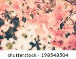 paper flowers or bougainvillea... | Shutterstock . vector #198548504