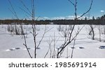 twigs in front of swedish... | Shutterstock . vector #1985691914
