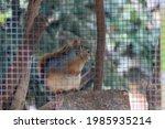 Wild Squirrel Locked In Cage...