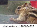 A Chipmunk  Squirrel Trapped In ...