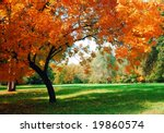 autumn at the park   Shutterstock . vector #19860574