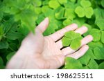 Four Leaf Shamrock Found