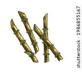 cane sugar. sugarcane plant....   Shutterstock .eps vector #1986855167