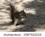 Feeding City Squirrels Peanuts...