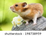 Stock photo cute hamster syrian hamster on a stone 198738959