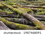 Mossy Scrap Wood In The Forest