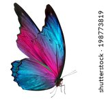 Stock photo beautiful butterfly isolated on a white background 198773819