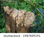 Close Up Of A Damaged Tree...