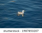 White And Gray Seagull Floating ...