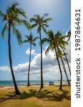 Tropical Hawaiian Beach. Palm...
