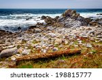 Rocky Shoreline Of Asilomar...