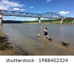 A woman walking her dog with many other dogs playing at a beautiful dog park along with north saskatchewan river in Edmonton, Alberta, Canada