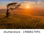 Alone at sunset with a lonely stunted windswept tree on top of windover hill near Wilmington east Sussex south east England.