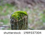 Moss Growing On Top Of A Fence...