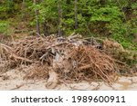 Pile Of Broken Tree Branches...