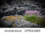 Flowers On A Stone