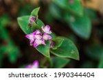 Beautiful Purple Flower...