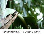 Bronze Mannikin Bird Perched On ...